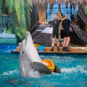 Дельфинарии, океанариумы Чапаевска