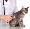 Ветеринарные клиники в Чапаевске
